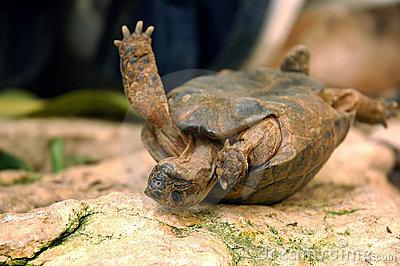 Savoir prendre des risques : une histoire de tortue