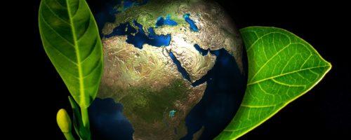 La révolution verte : l'enjeu des entreprises françaises